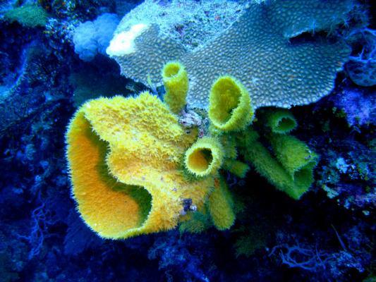 Морские губки могут пригодиться нам не только в косметических целях. (Фото: The Doherty's / Flickr.com)
