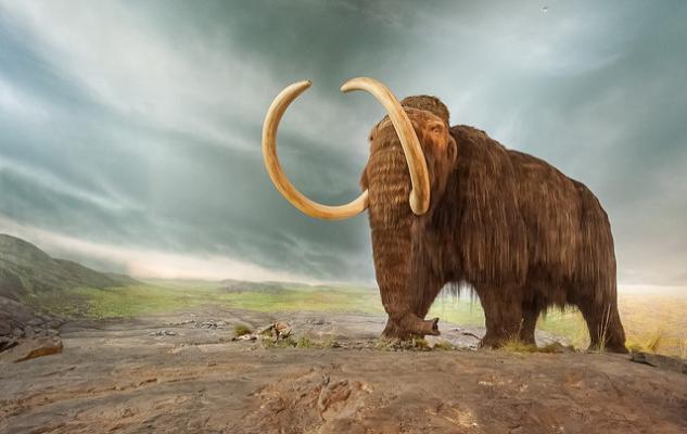 Споры о том, почему вымерли гигантские млекопитающие, по-видимому, прекратятся еще не скоро. (Фото: David Schultz / Flickr.com)